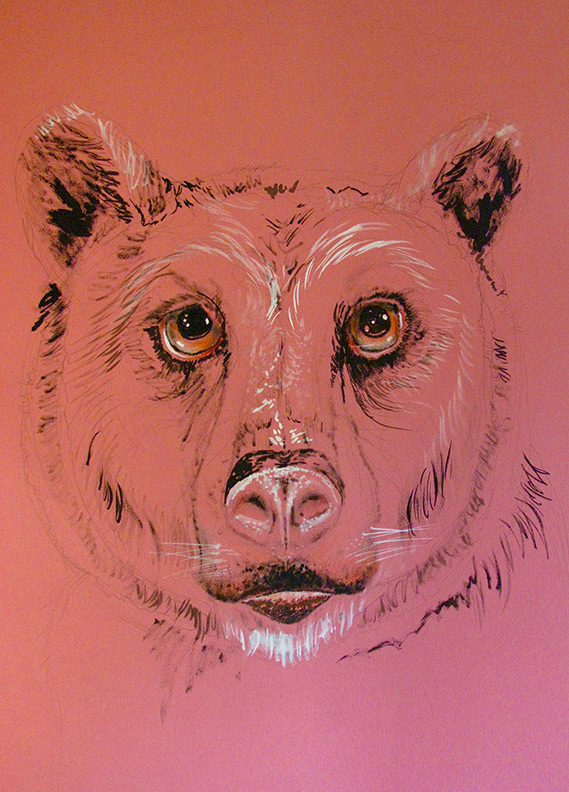 Liz Downing drawing, Pink Bear
